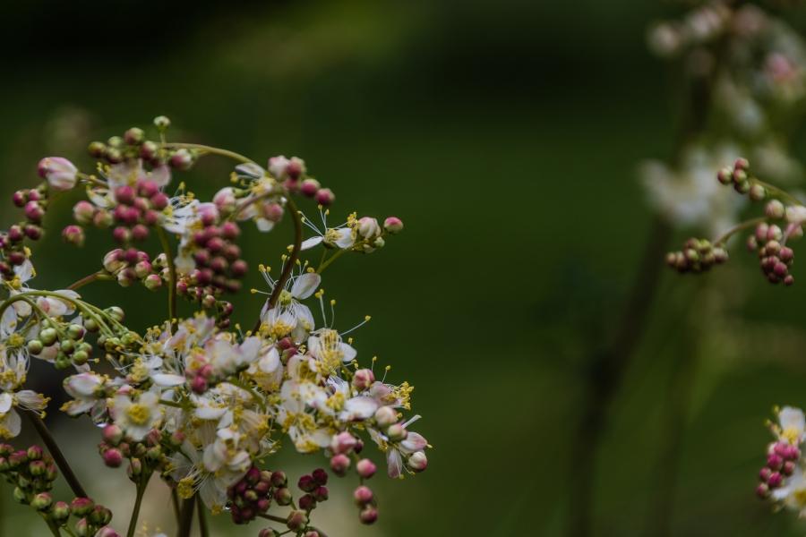 Blossoms-2108