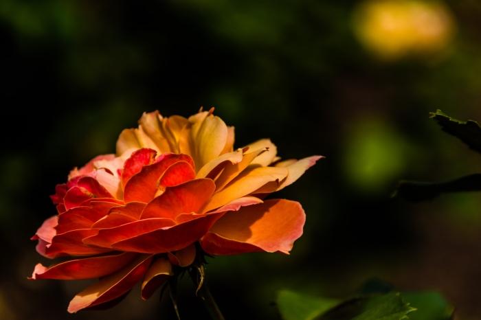 Orange_Yellow